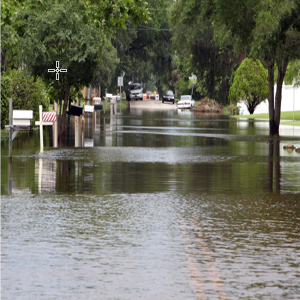 Picture of a Flooded Street and Trees